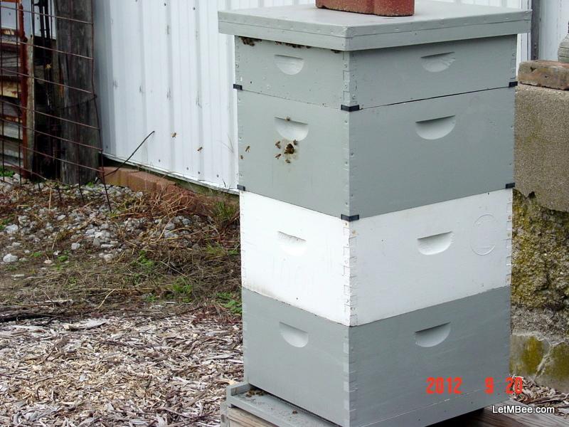 Golden mean bee hive plans | Dummy Beginner